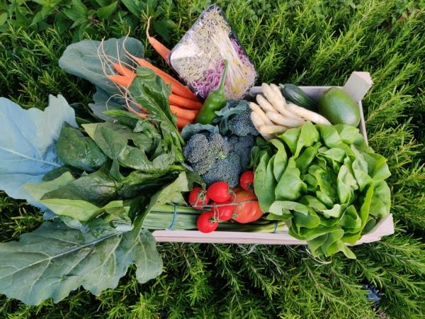 lokale groenten gent