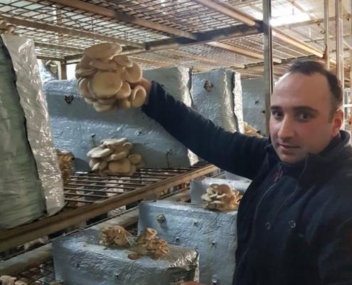 samenwerking_paddenstoel